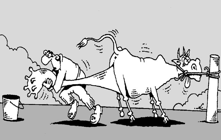 творожная коровы картинки карикатуры отсутствии